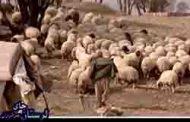 فیلم انتخاباتی سردار جواد درویش وند- شناخت دامنه های مختلف صنعتی- (27)